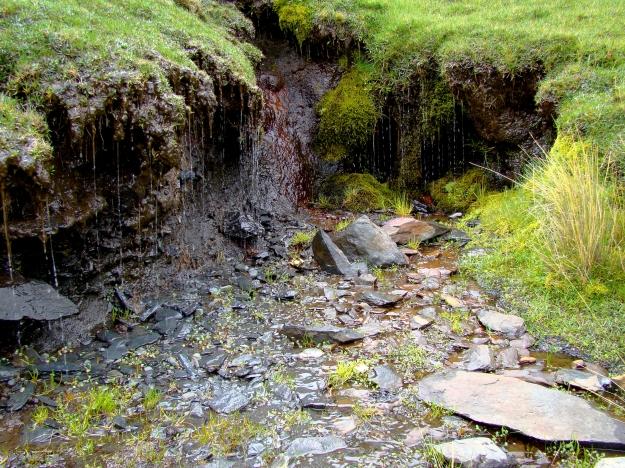 Les écosystèmes boliviens en photos... Bofedale-4300m-7